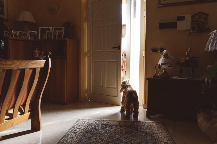 cane il giorno del matrimonio